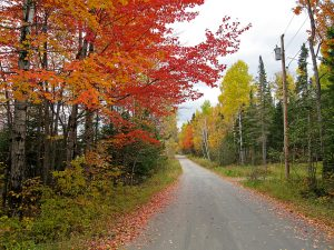 Maine fall foliage