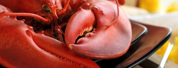 Lobster from Maine Lobster Shacks