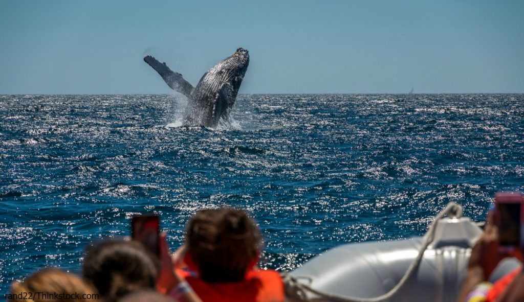 best whale watching in maine