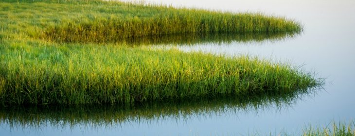 Grass in the marshes behind Wells Beach, Maine